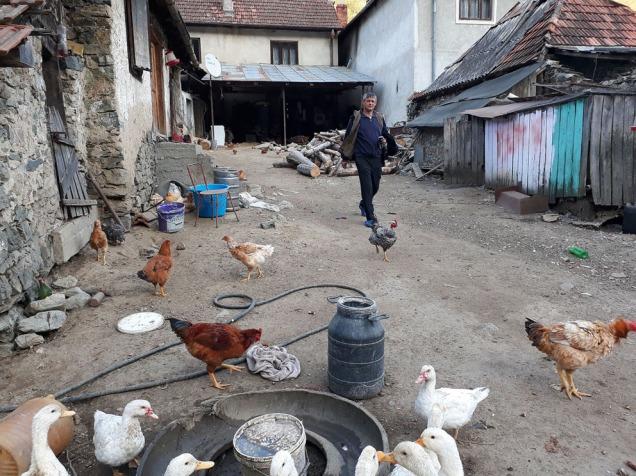 Bakgården til kalkbrenner Ghita. Et yrende liv med høns og ender og gris. Et svært trivelig sted.