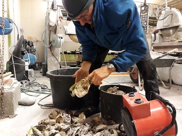 Torbjørn Løland sorterer skjell til brenning i elektrisk ovn