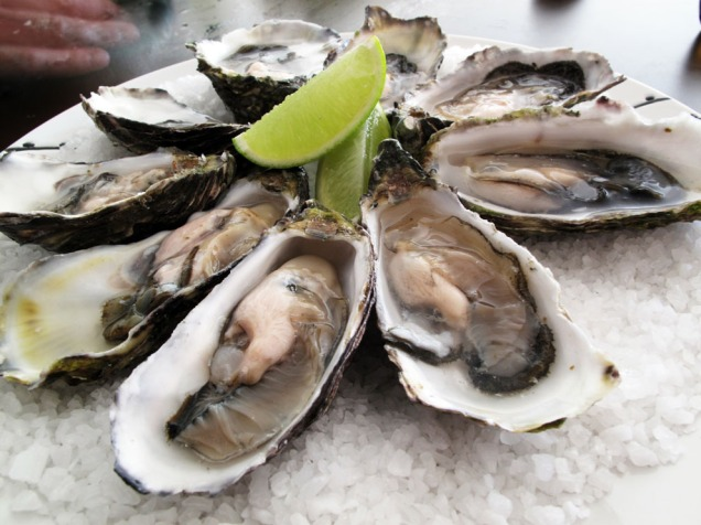 Stillehavsøsters er først og fremst mat! Fra Guido - Flickr: Pacific oysters, CC BY-SA 2.0, https://commons.wikimedia.org/w/index.php?curid=16325140
