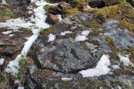 Kvernsteinsbekken. Omriss av ei handkvern hogd ut på ei vasskvern – midt i stien! Foto: Per Storemyr