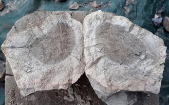 """Underbrent stein ses ved at det er en """"kjerne"""" av mørkere materiale i midten (og ellers ved at steinen stort sett er hardere enn når de er gjennombrente."""
